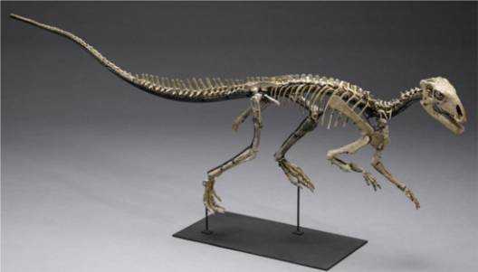 Bonham's offers American fossils and finest natural history items for auction