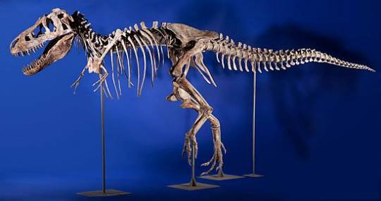 Tyrannosaurus skeleton for auction