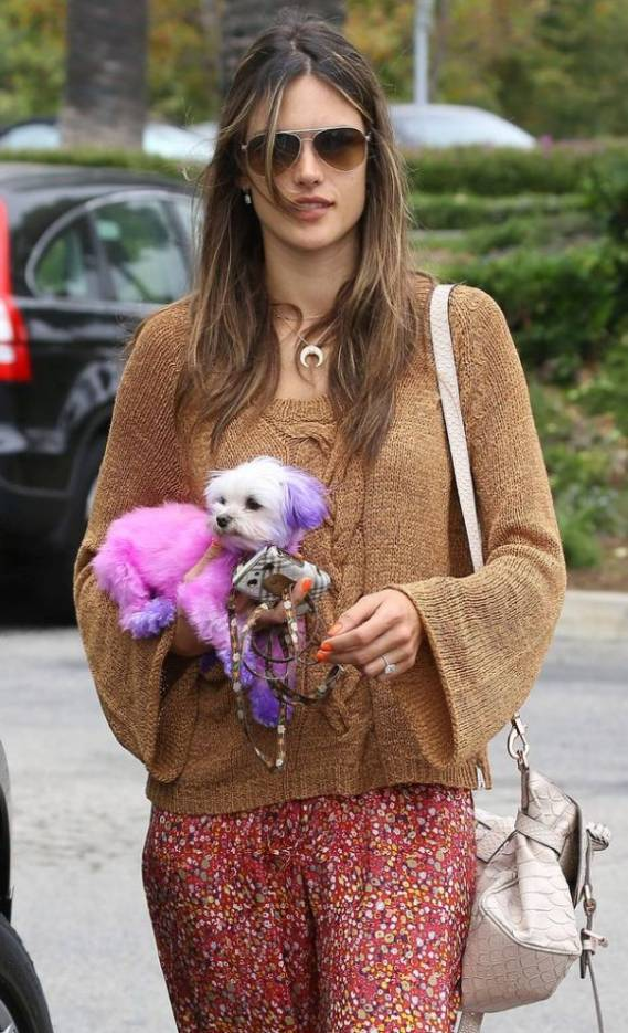Victoria's Secret angel Alessandra Ambrosio owns an adorable white colored pooch.