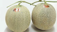 Yubari King Melon: One of the most expensive fruits in the world