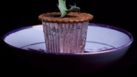 World's most expensive mince pie is worth £3,000