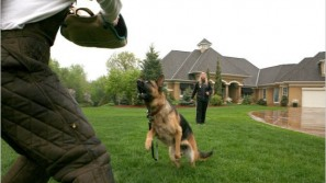 $230,000 'executive' guard dog for your protection