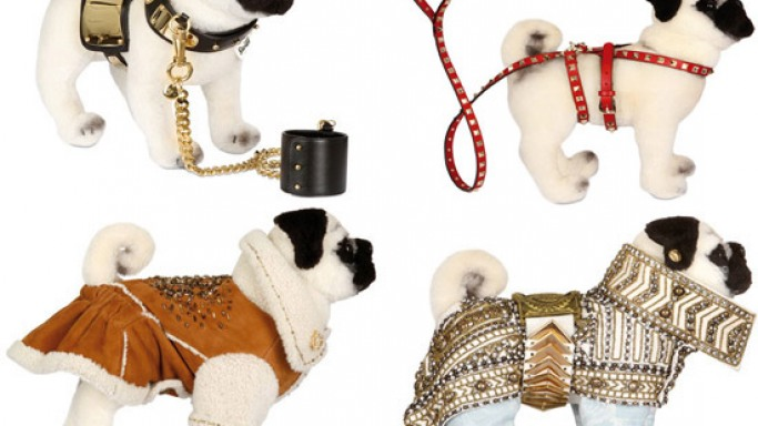 Top designers create pet couture for charity