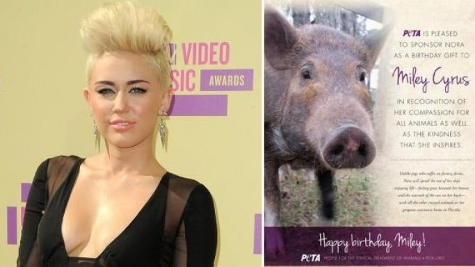 Miley Cyrus owns a pig