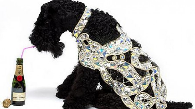 The £2500 Vivienne Westwood dog coat